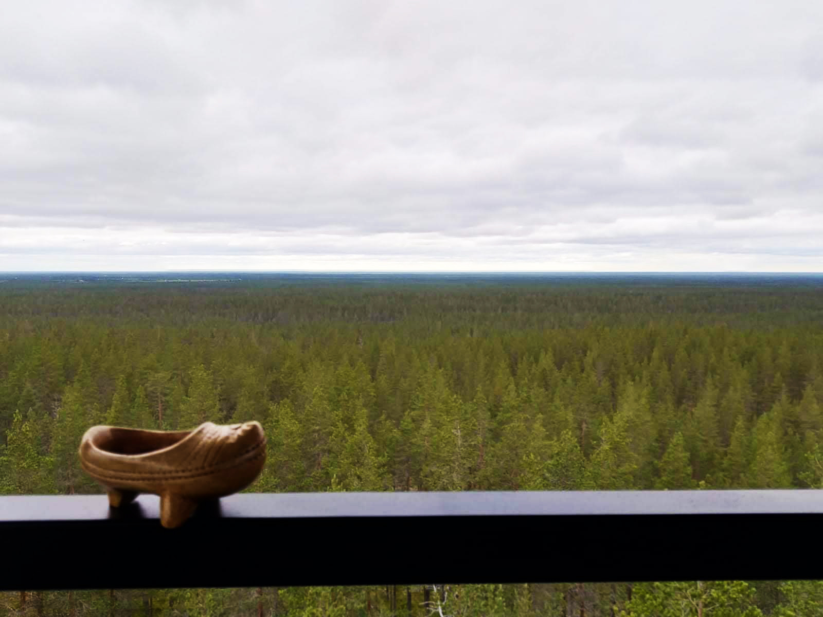 bosque finlandes Rokua