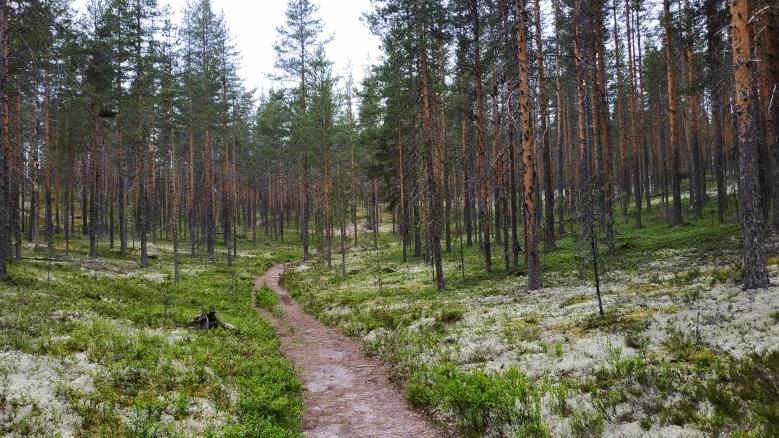 bosque finlandes con liquen