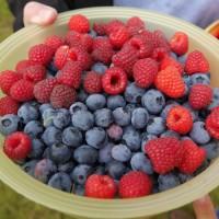 frutas del bosque recetas en finlandia