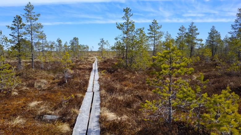 Ciénaga en Finlandia