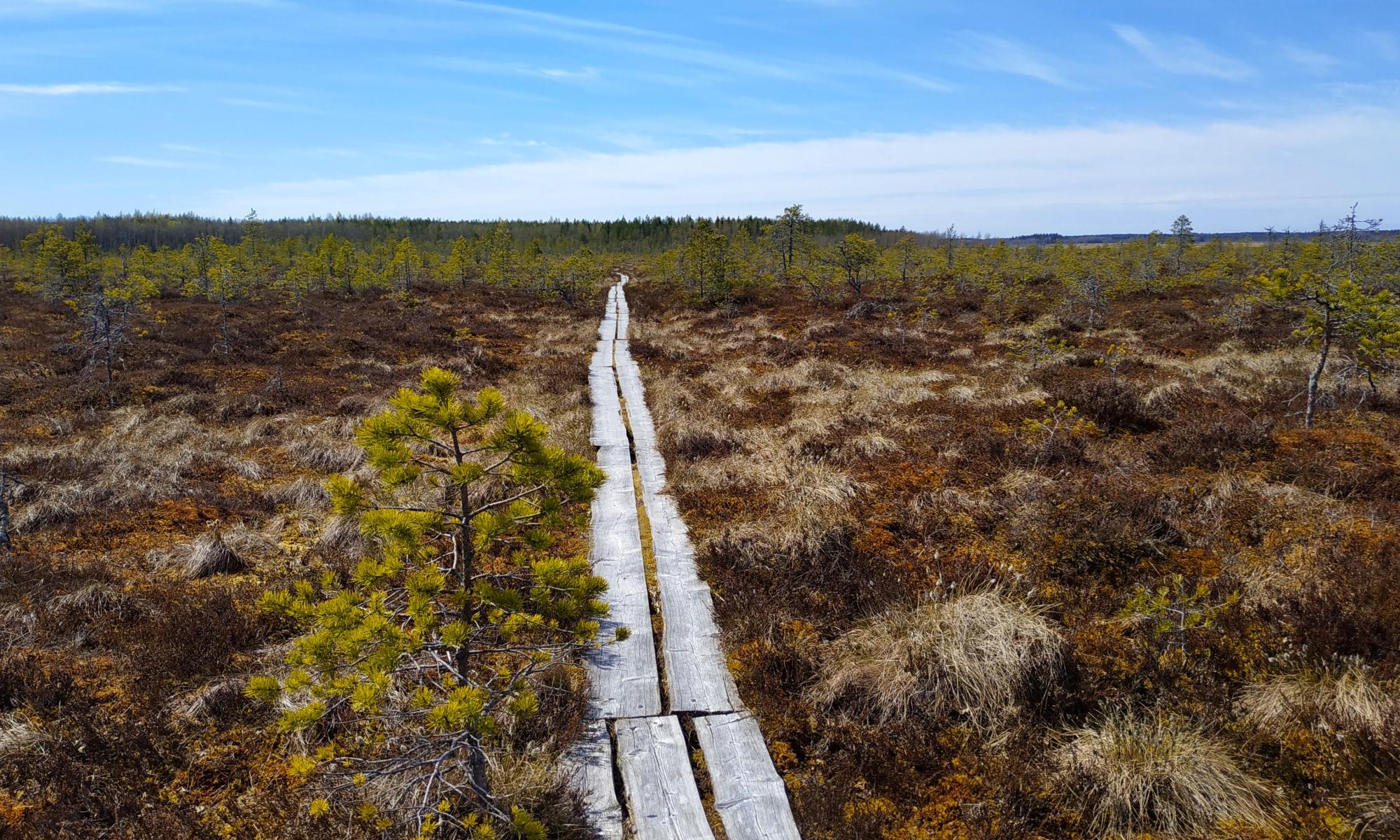Ruta por pantanos en Finlandia
